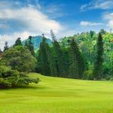 Sommerpark, Hecke, grüne Wiese und blauer Himmel lizenzfreie stockfotos