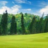 Sommerpark, Hecke, grüne Wiese und blauer Himmel stockfotografie
