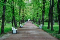 Sommerparklandschaft, Perspektive, Reihen von hellgrünen Bäumen, Bahn mit weißen hölzernen Niederlassungen Lizenzfreie Stockfotografie