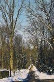 Sommerpromenade durch das forrest von St. poelten in der Wintersaison Lizenzfreie Stockfotos