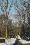 Sommerpromenade through the forrest of st. poelten in winter season. Picture shows the Sommerpromenade through the forrest of st. poelten in winter season Royalty Free Stock Photos