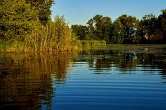 Sommerreflexionen im Fluss Stockbild