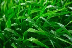 Sommerregen Stockbild