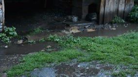 Sommerregen im Hof stock footage