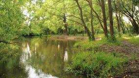 Sommerregen im Waldregenwald mit flüssigem Fluss des Stromes durch ihn Regentropfen tropfen in die Flusskreise auf stock video