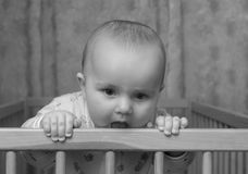 Sommerschwangerschaft. Stockfotografie