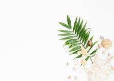 Sommerschwingungen Tropisches Palmblatt, Muscheln und Starfish Flache Lage, Draufsicht lizenzfreie stockbilder