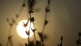 Sommersonne durch das Meer stock footage