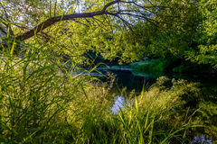 Sommersonnenaufgang über dem Fluss Stockfotos