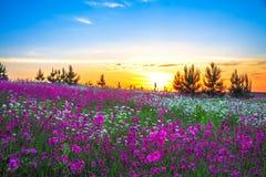 Sommersonnenaufgang über einer blühenden Wiese Lizenzfreie Stockfotos