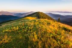 Sommersonnenaufganglandschaft in den Karpatenbergen lizenzfreies stockbild