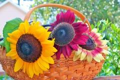 Sommersonnenblumen Stockfotografie