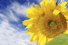 Sommersonnenschein lizenzfreie stockfotos