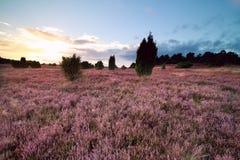 Sommersonnenuntergang über rosa blühender Heide lizenzfreie stockfotografie