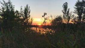 Sommersonnenuntergang auf einem See stock footage