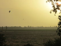 Sommersonnenuntergang im Süden von Ukraine lizenzfreies stockbild