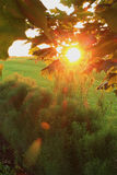 Sommersonnenuntergang mit Blendenfleckeffekt Lizenzfreie Stockfotografie