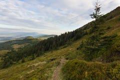 Sommersonnenunterganglandschaft in den Karpatenbergen lizenzfreie stockbilder
