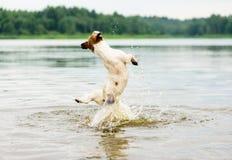 Sommerspaß am Strand mit dem Hund, der hoch in Wasseransicht von der Rückseite springt Lizenzfreie Stockfotos