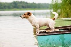 Sommerszene: nasser Hund, der auf Flussboot steht Stockbild