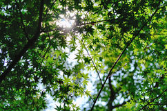 Sommertag (Farbton) Lizenzfreies Stockfoto