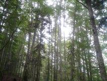 Sommertag im tiefen Wald Stockfotos
