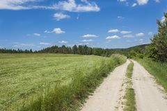 Sommertag und ein Schotterweg, der zu den Wald auf dem Horizont im Hintergrund führt Blauer Himmel mit Wolken Lizenzfreies Stockfoto