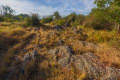 Sommerwärmer früher morgens in einem trockenen Wald Lizenzfreies Stockfoto