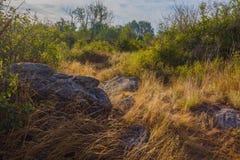 Sommerwärmer früher morgens in einem trockenen Wald Lizenzfreies Stockbild