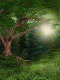 Sommerwald Stockbild