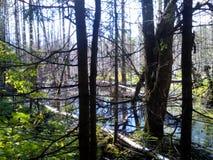 Sommerwald im Ganzen des Grüns und der Schönheit stockfotografie