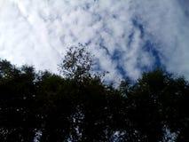 Sommerwald im Ganzen des Grüns und der Schönheit lizenzfreie stockfotos