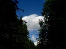 Sommerwald im Ganzen des Grüns und der Schönheit stockbild
