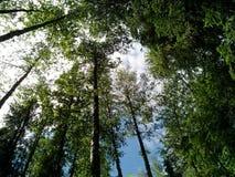 Sommerwald im Ganzen des Grüns und der Schönheit lizenzfreies stockbild