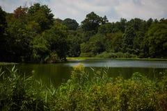 Sommerwald und -teich Stockbild