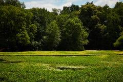 Sommerwald und -teich Stockfotografie