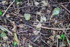 Sommerwaldboden Hintergrund, Beschaffenheit, Natur Lizenzfreies Stockbild