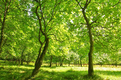 Sommerwaldlichtung mit jungen Bäumen. Lizenzfreie Stockfotos