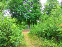 Sommerwaldwegfoto Lizenzfreies Stockbild