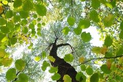 Sommerwaldwurmaugenansicht Rot und Orange färbt Efeublattnahaufnahme Blattschattenbild Lizenzfreies Stockfoto