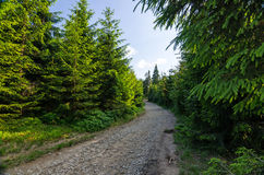 Sommerwanderweg Stockfoto