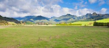 Sommerweidelandschaft Coromandel-Halbinsel NZ Stockbilder