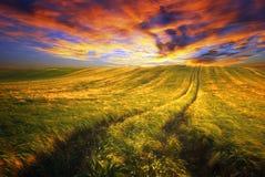 Sommerweizenfeld mit Weg in der bunten Sonnenuntergangzeit stockfotos