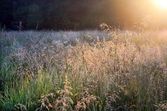 Sommerwiese lizenzfreies stockbild