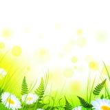 Sommerwiese Stockbild