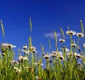 Sommerwiese lizenzfreie stockbilder