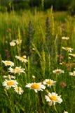 Sommerwiese lizenzfreies stockfoto