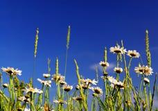 Sommerwiese stockbilder