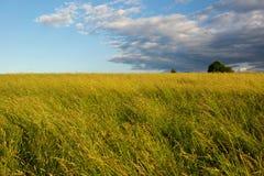 Sommerwiese Lizenzfreie Stockfotografie