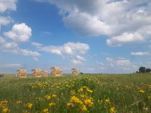 Sommerwiese in der Ostsee lizenzfreie stockfotos